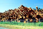 evergreen, conifer, log, pile, stack, IWLV01P12_14