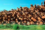 evergreen, conifer, log, pile, stack, IWLV01P12_16.2172