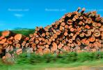 evergreen, conifer, log, pile, stack, IWLV01P12_19.2172
