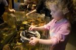 Girl playing with Sea Life, touch tank, hands-on, aquarium, sealife, starfish, clams, abalone, hands-on exhibit, touch, KEPD01_020
