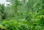 Rain Forest, Jungle, verdant, NBCV01P01_14