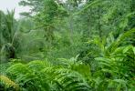 Rain Forest, Jungle, verdant, NBCV01P01_14B