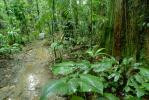 Rain Forest, Jungle, verdant, NBCV01P01_15