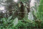 Rain Forest, Jungle, verdant, NBCV01P02_06