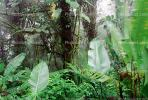 Rain Forest, Jungle, verdant, NBCV01P02_06B