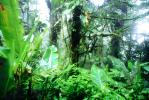 Rain Forest, Jungle, verdant, NBCV01P02_07