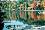 fall colors, reflection, reflecting, pond, lake, water, Forest, Woodlands, autumn, NCOV01P01_17
