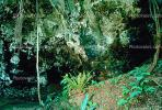 cave, mouth, rainforest, tree, rain, wet, Rainy, rain forest, fern, moss, path, NDCV01P02_13.1274