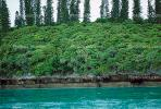 Tropical Pine Trees, Island, Coral Reef, NDCV01P05_05.1274