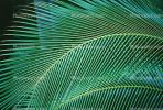 Palm Tree Fronds, texture, background