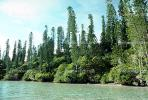 Tropical Pine Trees, Island, Coral Reef, NDCV01P07_12.1274