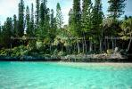 Tropical Pine Trees, Island, Coral Reef, NDCV01P07_16.1274