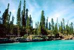 Tropical Pine Trees, Island, Coral Reef, NDCV01P07_17.1274