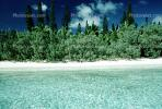 Tropical Pine Trees, Island, Coral Reef