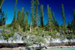 Tropical Pine Trees, Island, Coral Reef, Pacific Ocean, NDCV02P08_04.1276