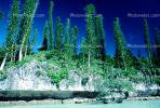 Tropical Pine Trees, Island, Coral Reef, Pacific Ocean, NDCV02P08_05