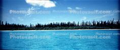 Tropical Pine Trees, Island, Coral Reef, Pacific Ocean, NDCV02P09_13