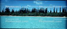 Tropical Pine Trees, Island, Coral Reef, Pacific Ocean, NDCV02P09_14
