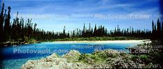 Tropical Pine Trees, Island, Coral Reef, Pacific Ocean, NDCV02P09_16