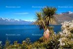 palm tree, mountain range, Queenstown