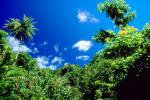 Trees, Rainforest, Island of Tahiti