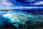 Coral Reef, Island of Moorea