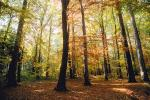 colorful Forest, Woodlands, autumn, Equanimity, NEGV01P01_19.0925