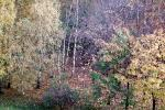 trees, forest, fall colors, autumn, NGLV01P01_09