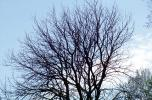 Bare Tree, NLIV01P04_02