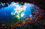 Clouds Reflecting in a Pond, Water, Reflection, Autumn, NLKV01P02_09B
