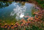 Clouds Reflecting in a Pond, Water, Reflection, Autumn, NLKV01P02_11.0926