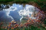 Clouds Reflecting in a Pond, Water, Reflection, Autumn, NLKV01P02_14