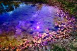 Clouds Reflecting in a Pond, Water, Reflection, Autumn, NLKV01P02_16.0926