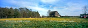 Field of Daisies, Barn, Springtime Flowers, Green Bay Peninsula, Door County, Wisconsin, NLWV01P04_11