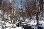 Snow, ice, stream, forest, deciduous, NMTV01P01_06