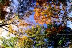 Woodlands, trees, fall colors, autumn, Vegetation, Colorful, Magical, Woods, Forest, Exterior, Outdoors, Outside, NMTV01P04_07