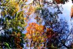Woodlands, trees, fall colors, autumn, Vegetation, Colorful, Magical, Woods, Forest, Exterior, Outdoors, Outside, NMTV01P04_08