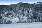 Ice, Trees, Cold, Chill, Chilled, Chilly, Cool, Frigid, Frosty, Frozen, Snowy, Winter, Wintry, NNIV01P03_05