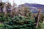 Trees, Glacier National Park, Mountain, NNMV01P03_11
