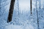 Cold frozen forest, woodlands, NNTPCD0654_114B