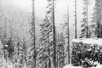 Snow covered Trees, forest, woodland, NNTPCD0655_002