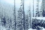 Snow covered Trees, forest, woodland, NNTPCD0655_002B