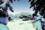 Snow covered Trees, forest, woodland, NNTPCD0655_016B