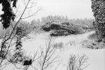 Snow covered Trees, forest, woodland, NNTPCD0655_017