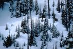 Mountain, trees, snow, ice, cold, Mountain Ridge, Olympic National Park, NNTV01P11_01.0934