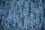 trees, snow, ice, cold, forest, woodland, Olympic National Park, NNTV01P11_02.0934