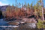 Forest, trees, woodlands, river, renewal After the Fire