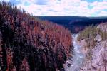 Forest, River, burned woodlands, After the Fire