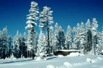 Trees, Forest in the Snow, building