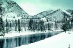Trees, Forest in the Snow, Yellowstone River, bucolic, stillness, reflection, water